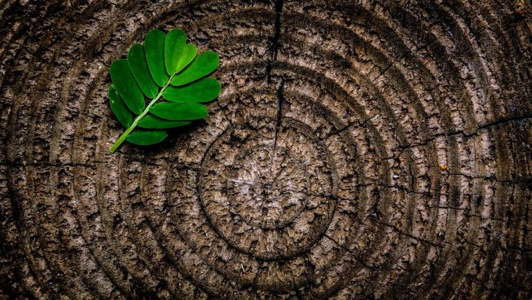 Tree rings and a leaf